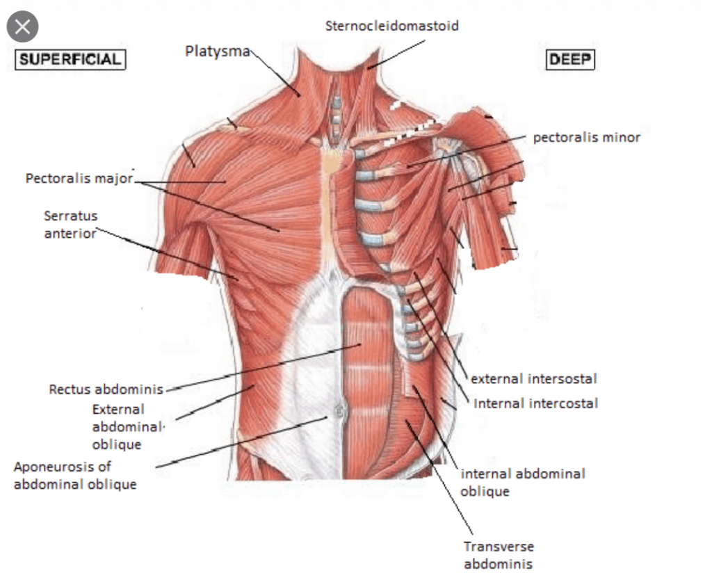 The Muscles of the chest & shoulder get tight for cyclists & triathletes